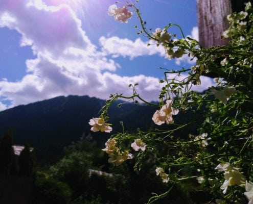 Beautiful Garden With A Stunning Chamonix Vista